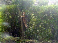 Col_in_tree